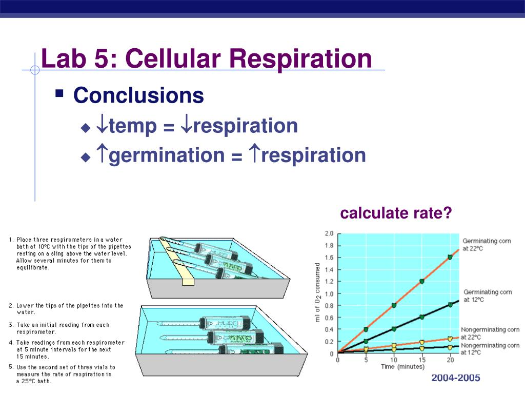 ap bio: lab 6 cellular respiration essay How do your cells extract energy from the food that you eat as it turns out, cells  have a network of elegant metabolic pathways dedicated to just this task learn.