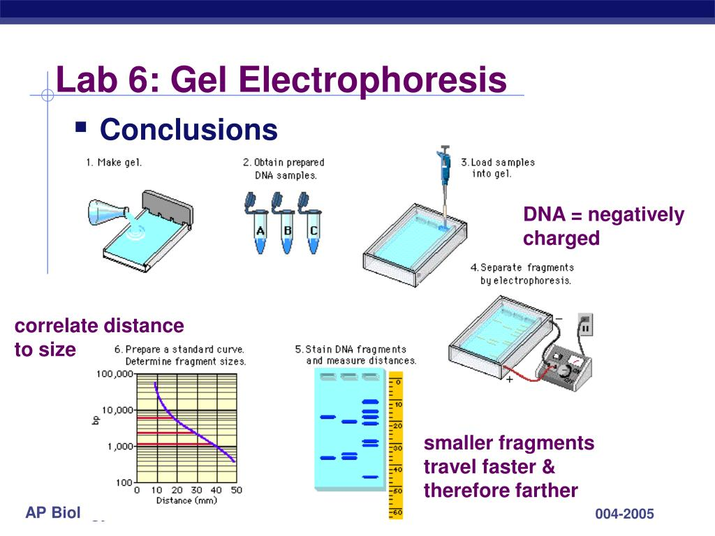 dna electropherises essay