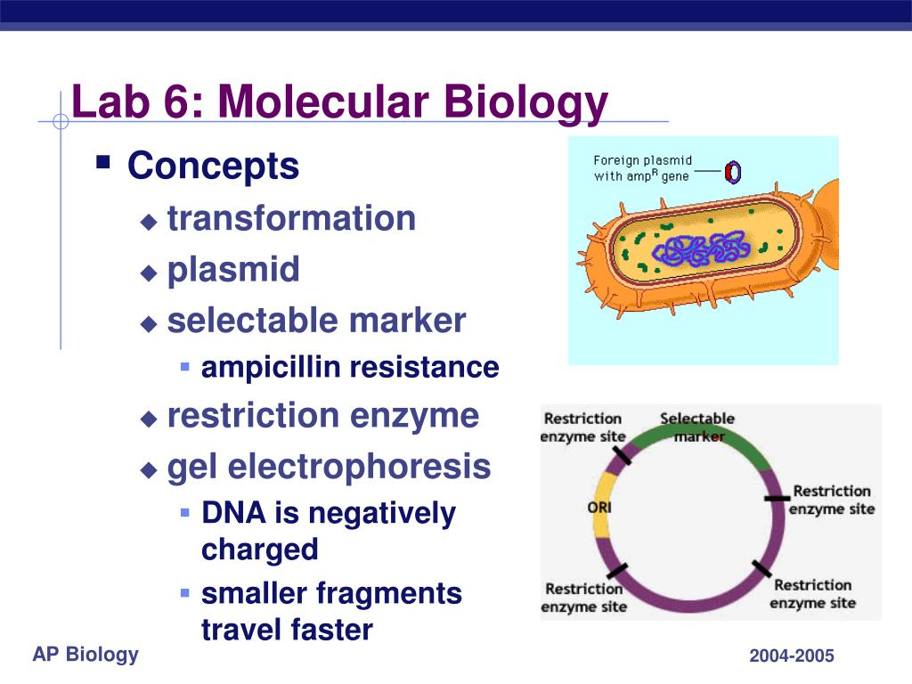molecular genetics essays Free genetics papers, essays, and research papers welcome to the buchmann institute for molecular life sciences the institute was founded in 2009 as part of the cluster of excellence.