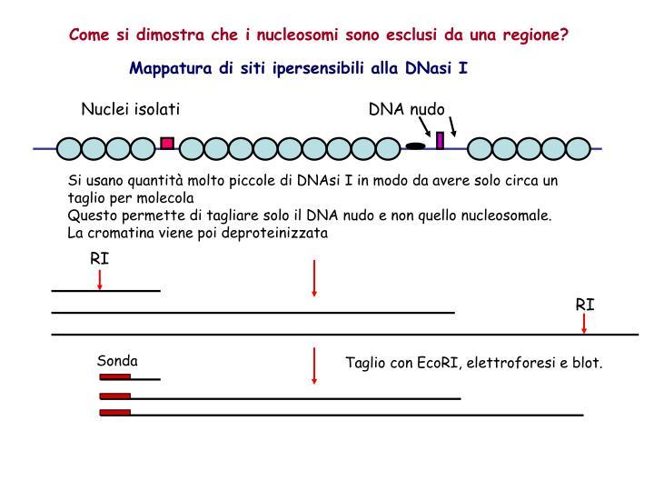 Come si dimostra che i nucleosomi sono esclusi da una regione?