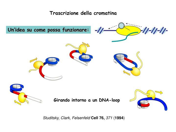 Trascrizione della cromatina
