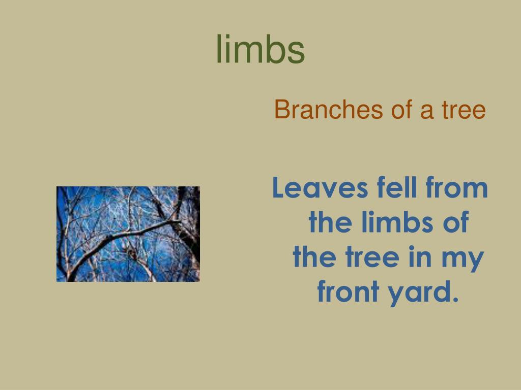 limbs
