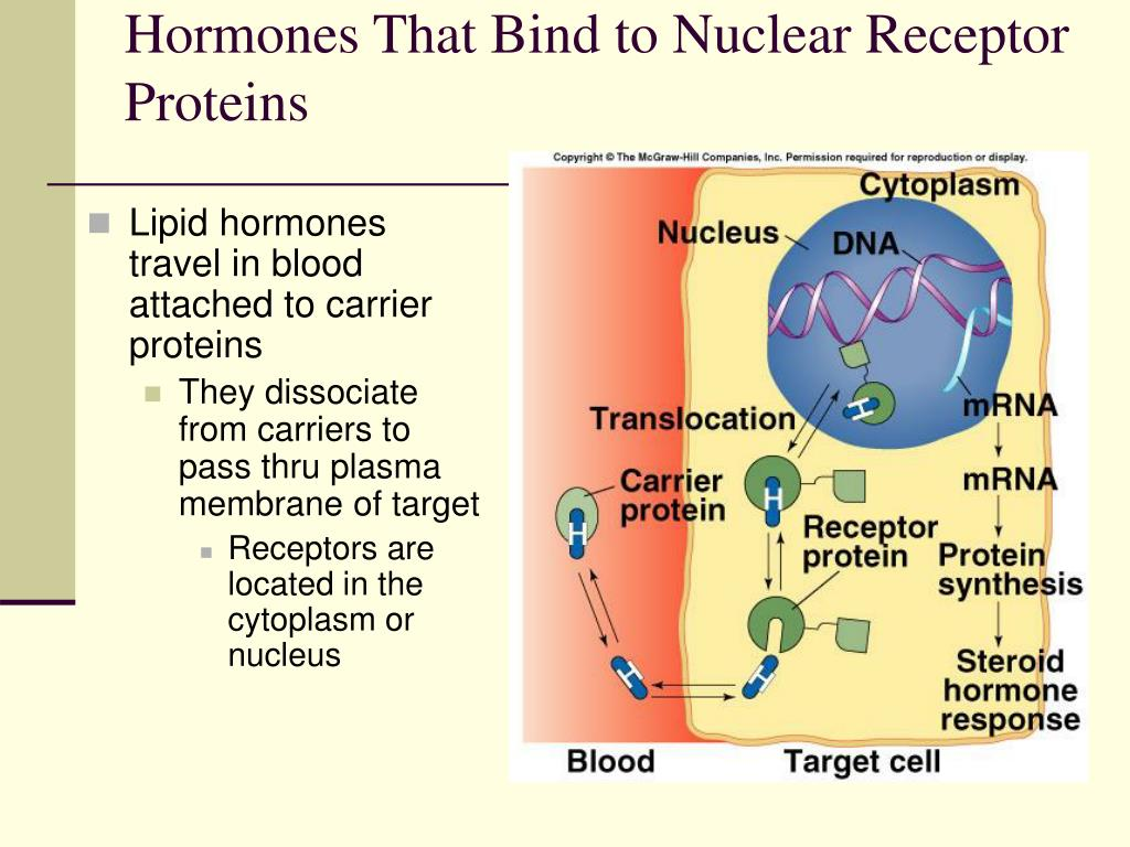 Hormones That Bind to Nuclear Receptor Proteins