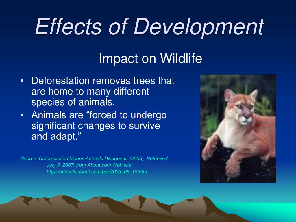 Impact on Wildlife