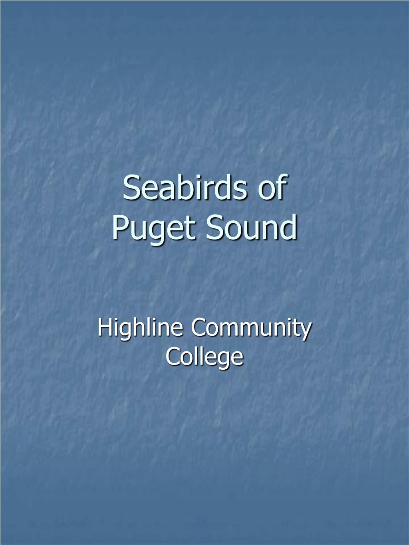 seabirds of puget sound