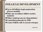 follicle development