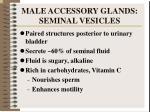 male accessory glands seminal vesicles