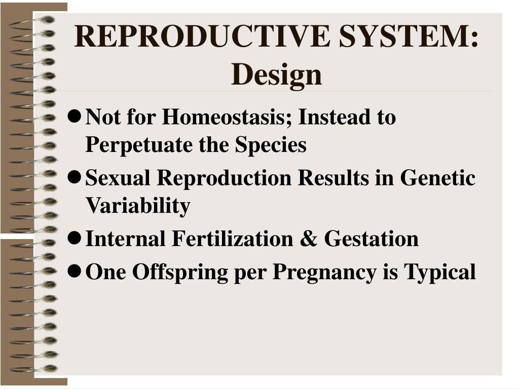 REPRODUCTIVE SYSTEM:  Design