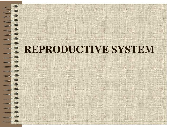Reproductive system l.jpg