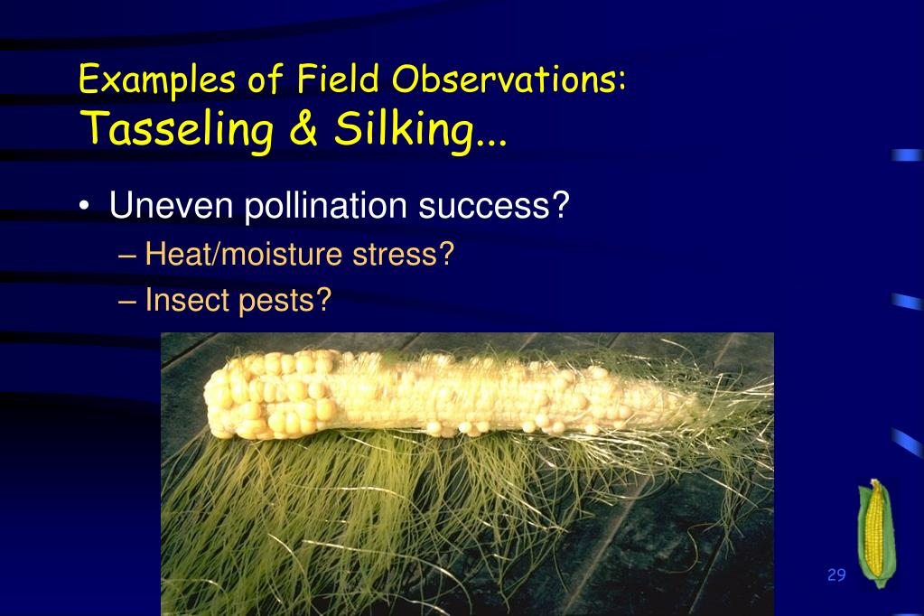 Examples of Field Observations: