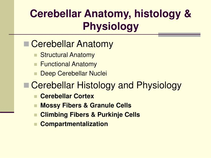 Cerebellar Anatomy, histology & Physiology