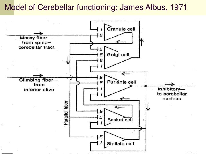 Model of Cerebellar functioning; James Albus, 1971