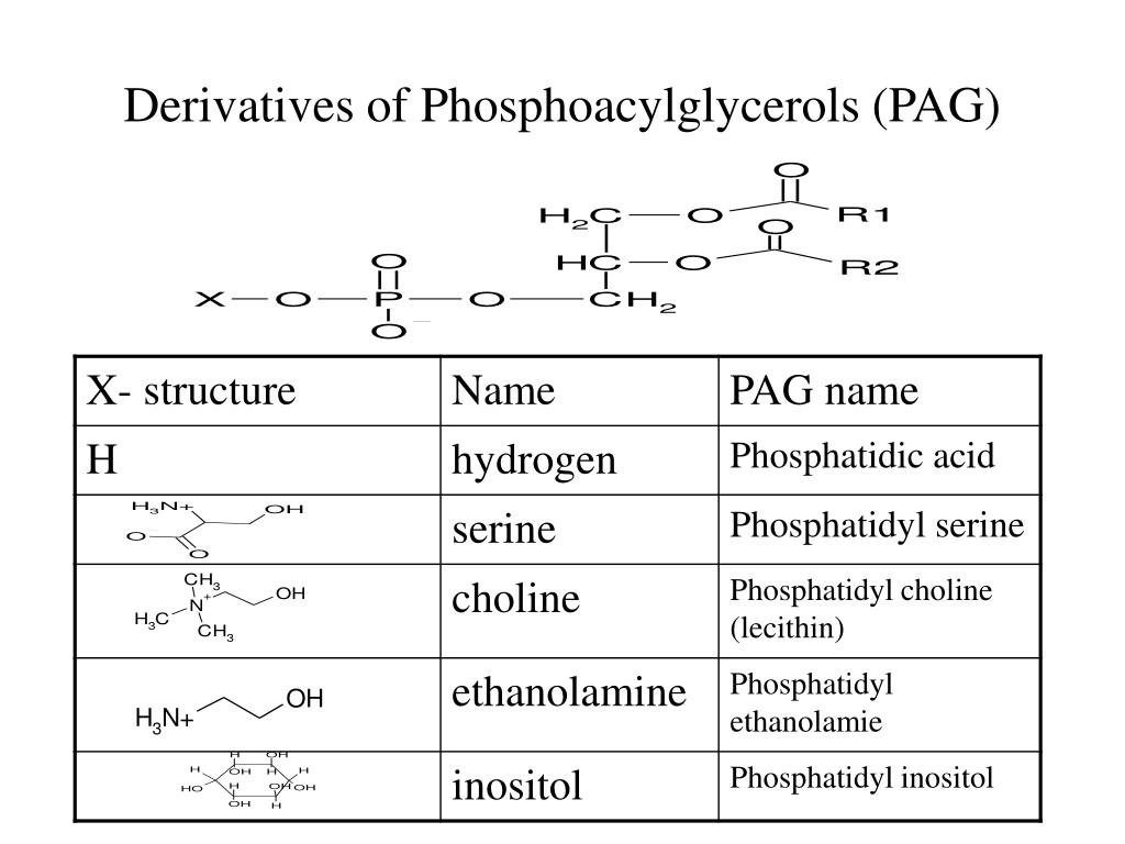 Derivatives of Phosphoacylglycerols (PAG)