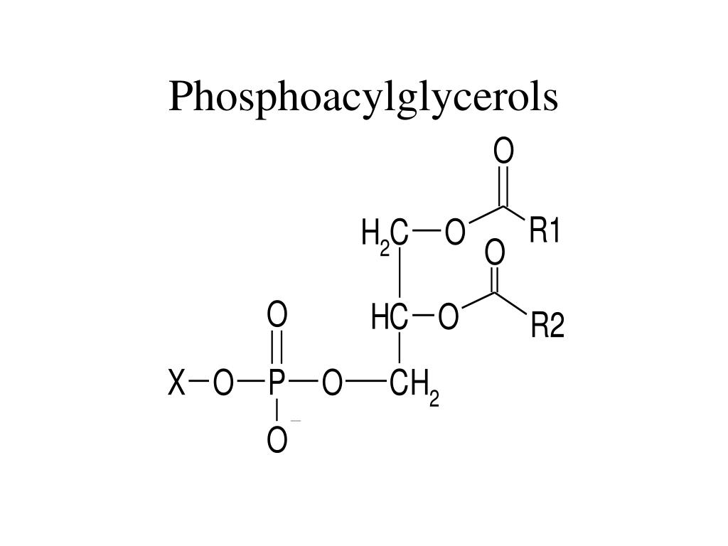 Phosphoacylglycerols