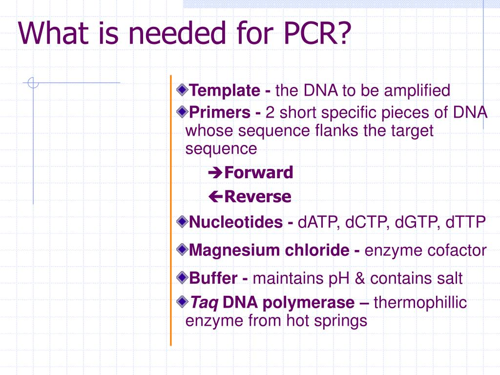 pcr template amount - ppt today s pcr gmo detection powerpoint presentation