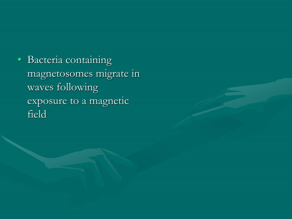 Bacteria containing magnetosomes migrate in waves following exposure to a magnetic field