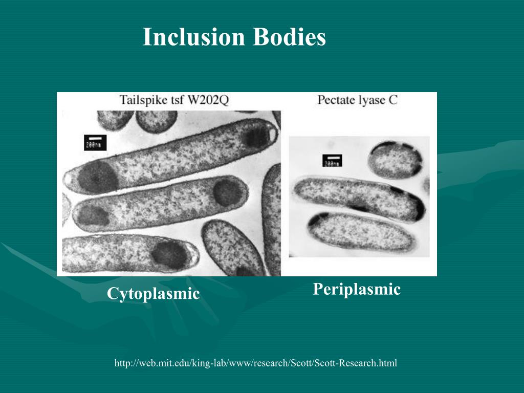 Inclusion Bodies