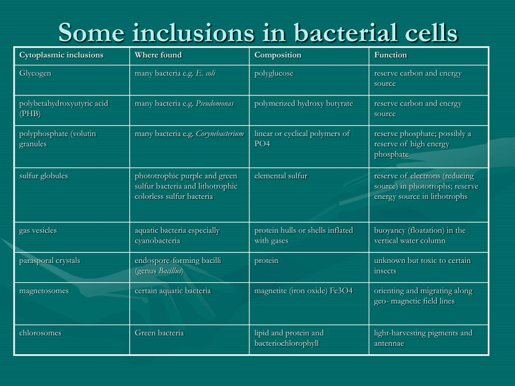 Some inclusions in bacterial cells