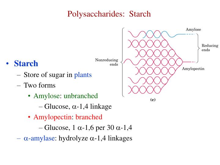 Polysaccharides:  Starch