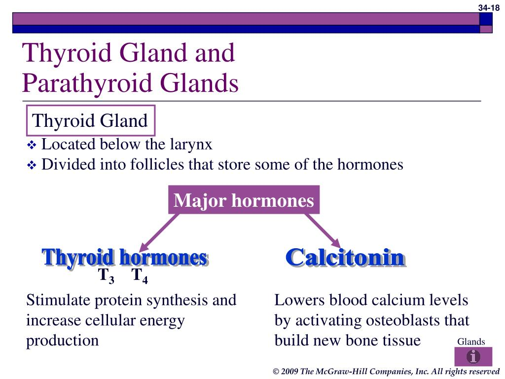 Thyroid Gland and