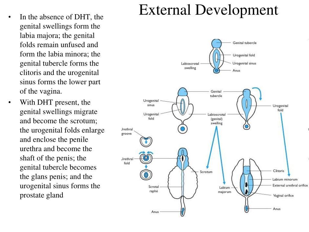 External Development