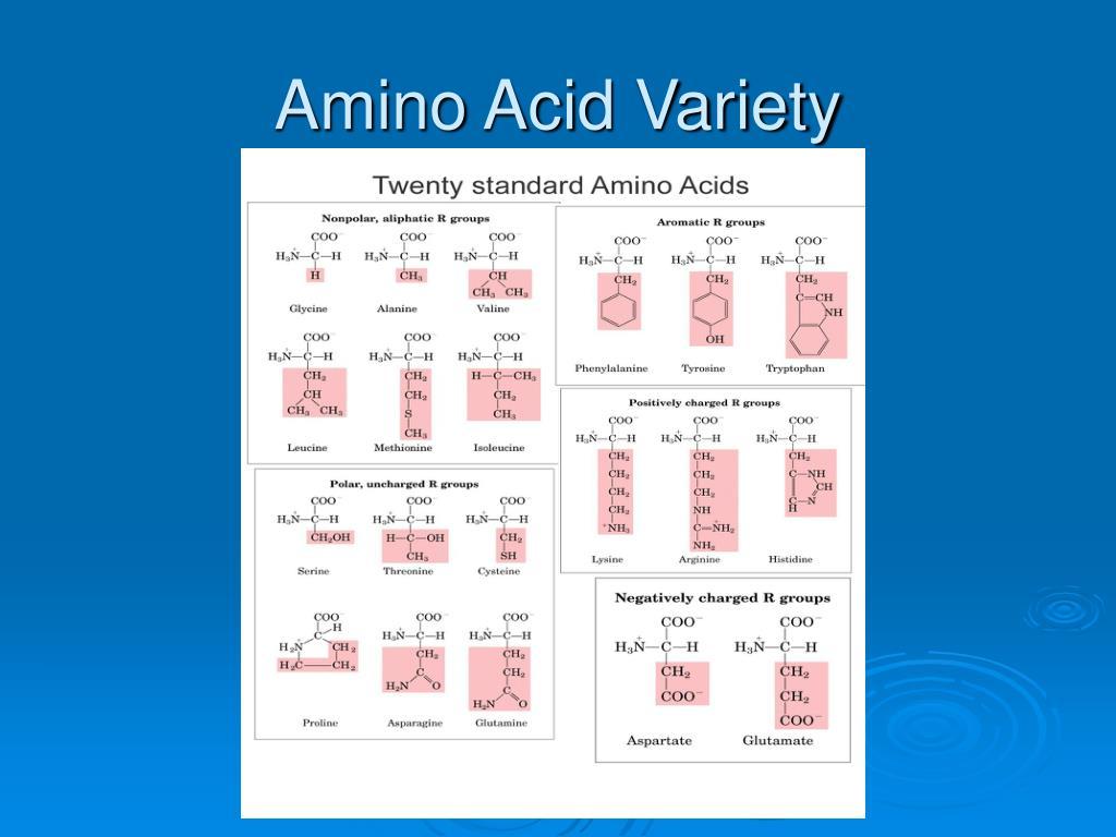 Amino Acid Variety