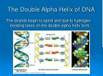 the double alpha helix of dna46