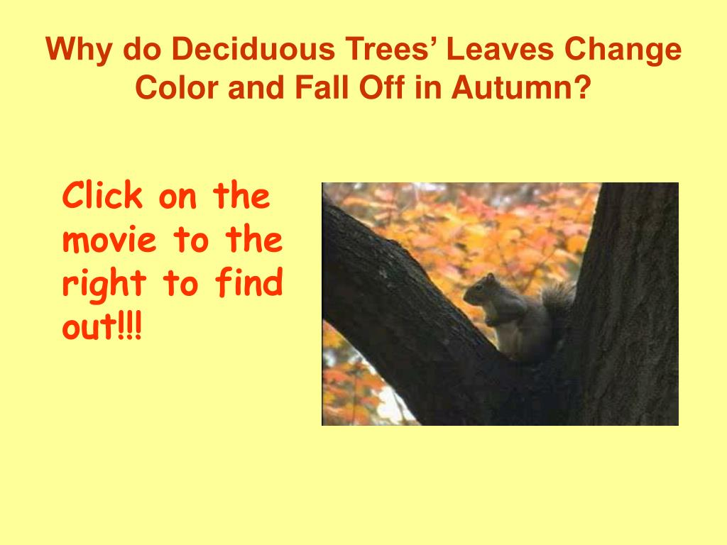 summary of why leaves turn color in the fall Get an answer for 'why do leaves turn color in the fall ' and find homework help for other reference questions at enotes.
