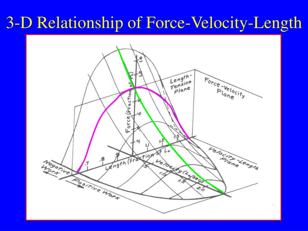3-D Relationship of Force-Velocity-Length