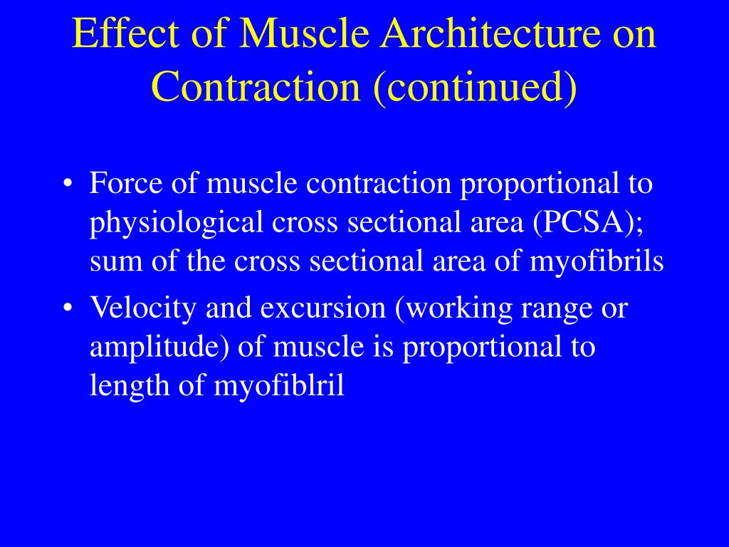 Effect of Muscle Architecture on Contraction (continued)