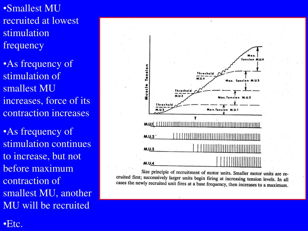 Smallest MU recruited at lowest stimulation frequency