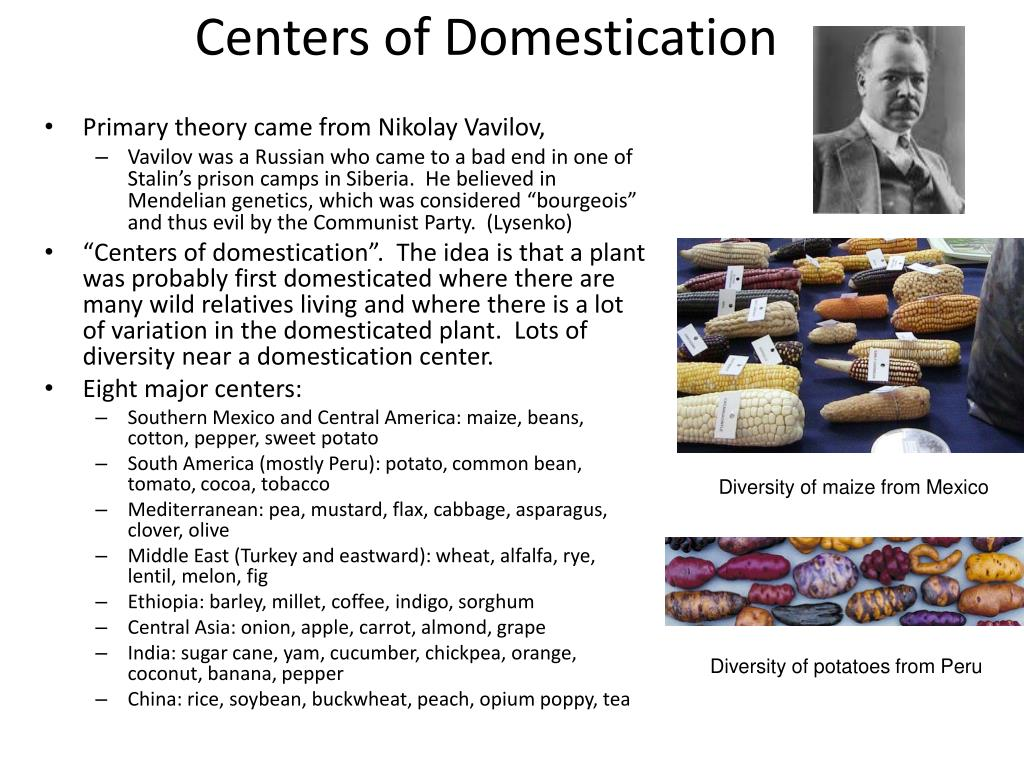 Centers of Domestication