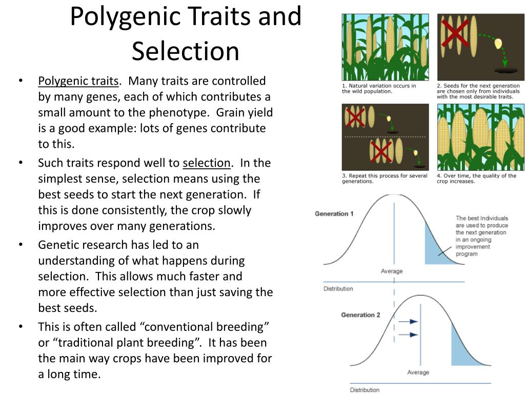 Polygenic Traits and Selection