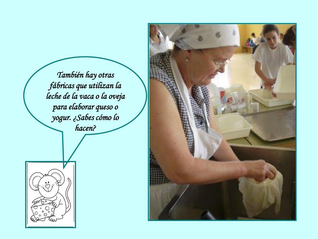 También hay otras fábricas que utilizan la leche de la vaca o la oveja para elaborar queso o yogur. ¿Sabes cómo lo hacen?