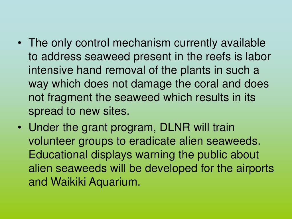 The only control mechanism currently available to address seaweed present in the reefs is labor intensive hand removal of the plants in such a way which does not damage the coral and does not fragment the seaweed which results in its spread to new sites.