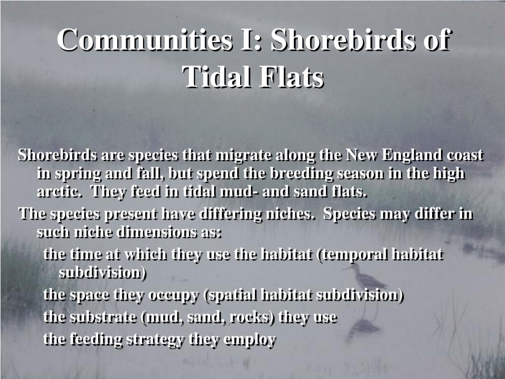 Communities I: Shorebirds of Tidal Flats