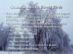 communities ii forest birds