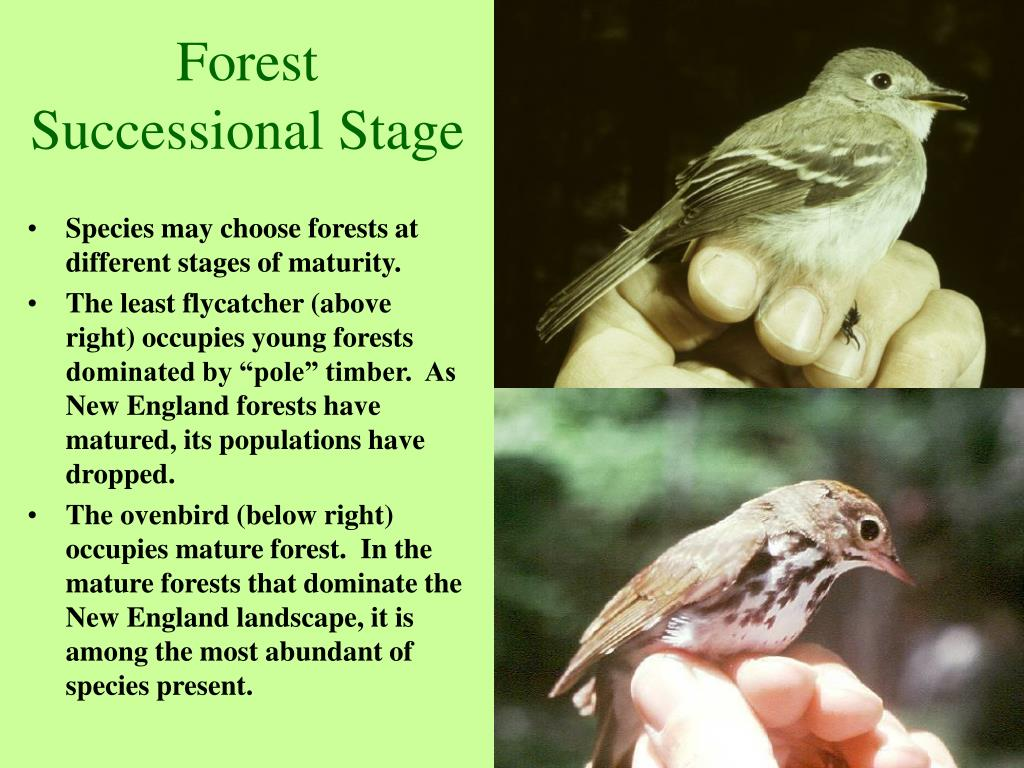 Forest Successional Stage