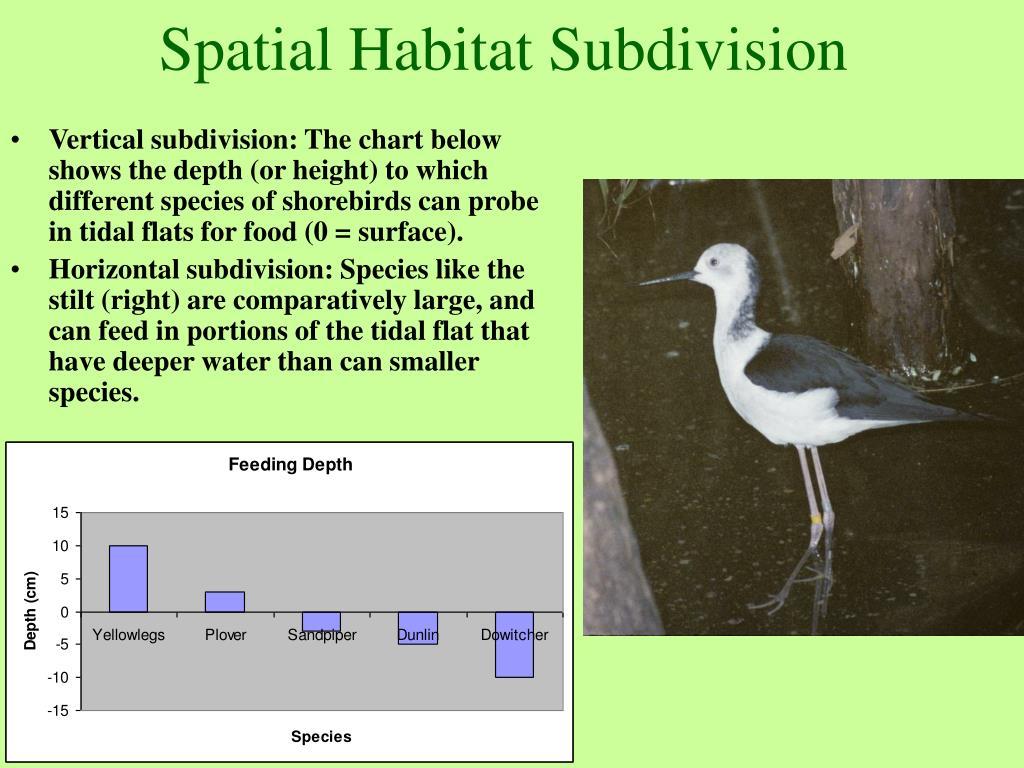 Spatial Habitat Subdivision