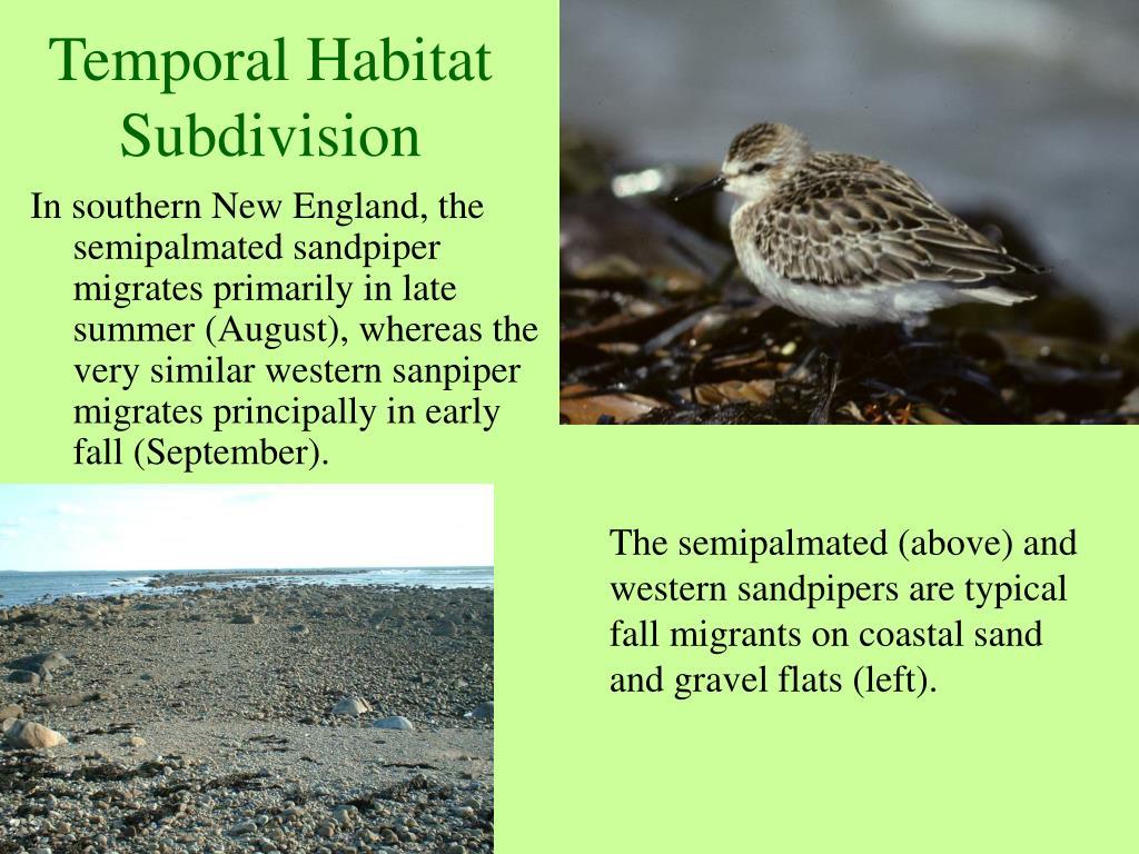 Temporal Habitat Subdivision