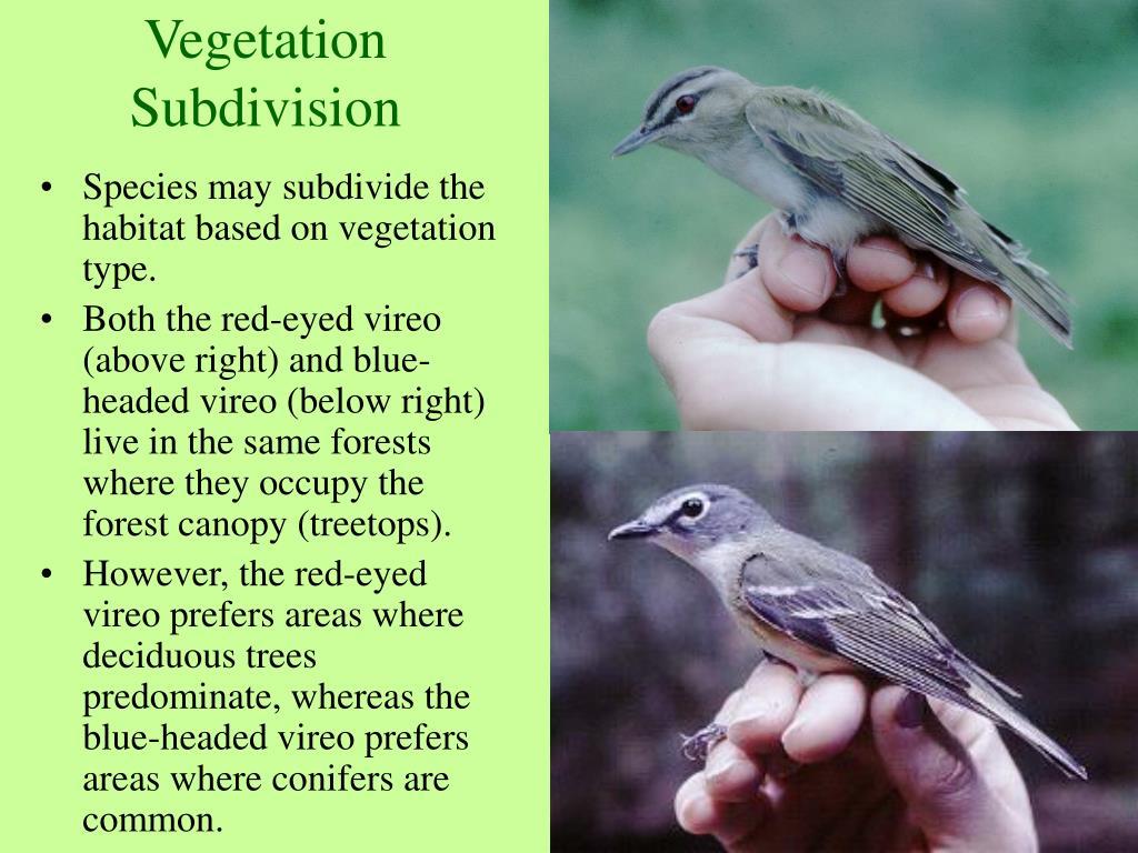 Vegetation Subdivision