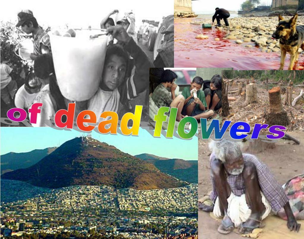 of dead flowers