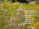 the shifting scenes of life7