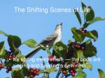 the shifting scenes of life8
