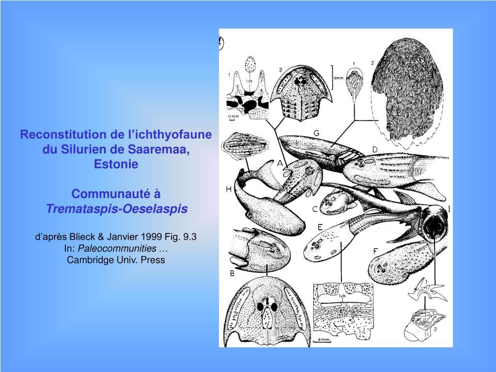 Reconstitution de l'ichthyofaune