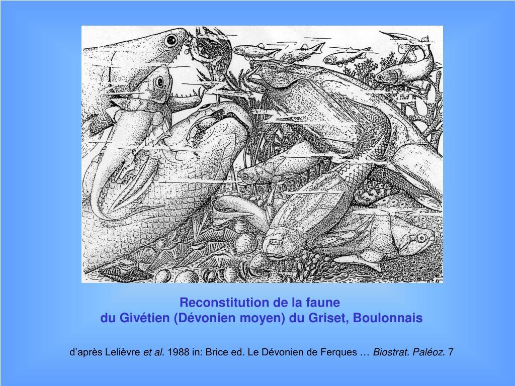 Reconstitution de la faune