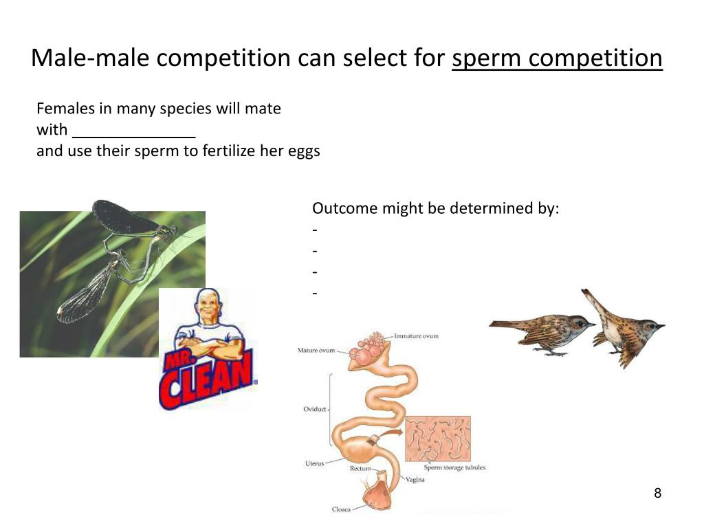 Male-male competition can select for