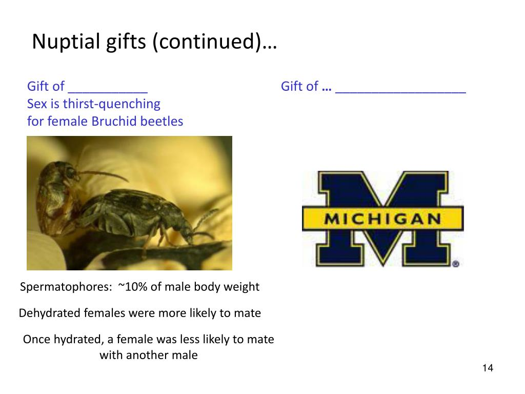 Nuptial gifts (continued)…