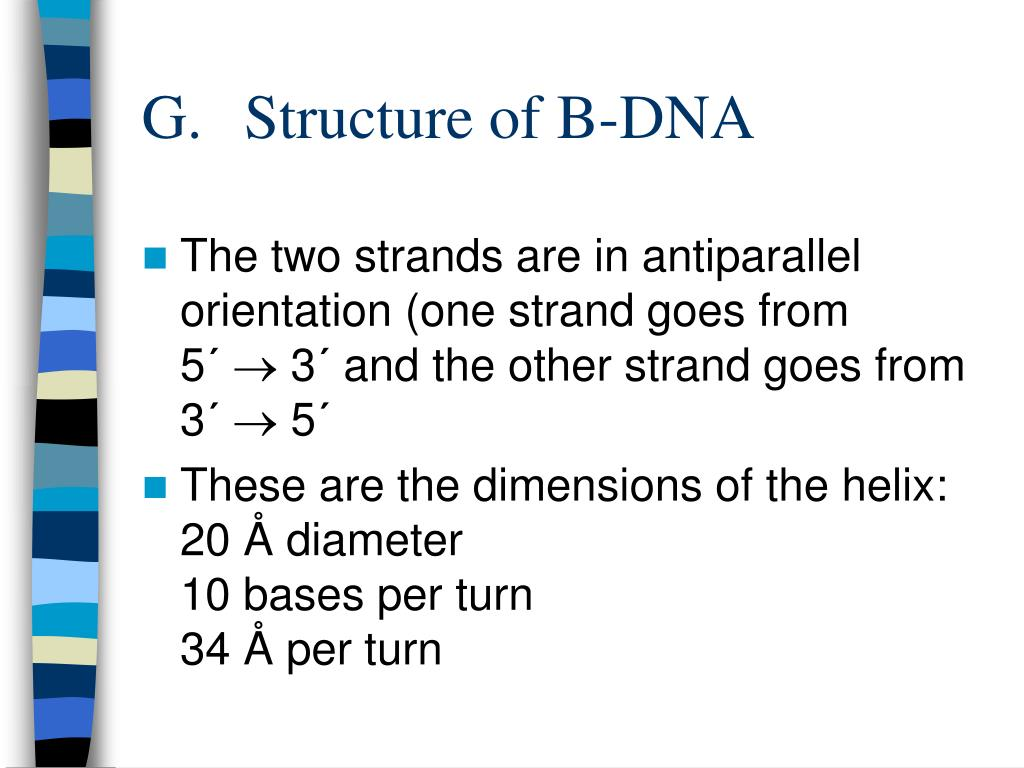 G.Structure of B-DNA
