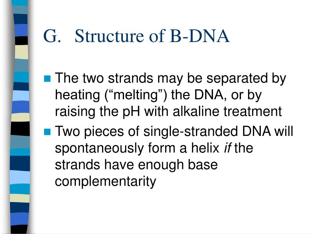 G.	Structure of B-DNA